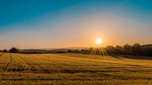 Wellington County countryside